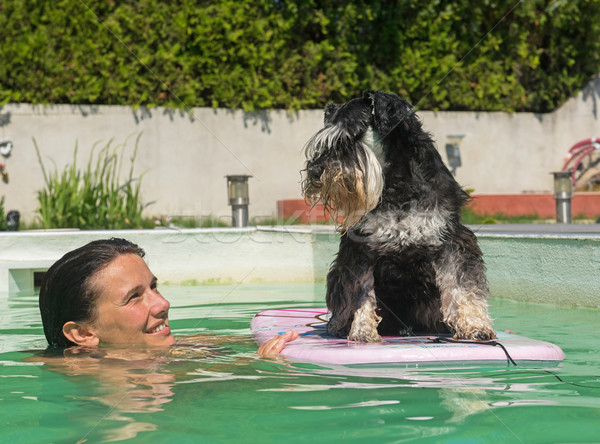 miniature schnauzer and swimming pool Stock photo © cynoclub