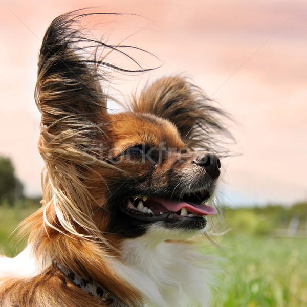 собака портрет вечер свет области Сток-фото © cynoclub