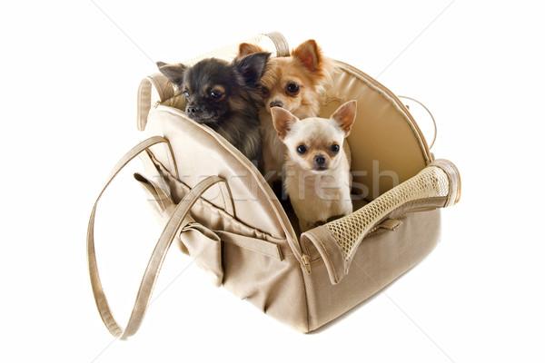 Foto stock: Viaje · bolsa · perro · grupo · animales · estudio