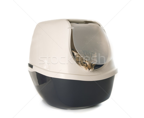 Closed cat litter box Stock photo © cynoclub