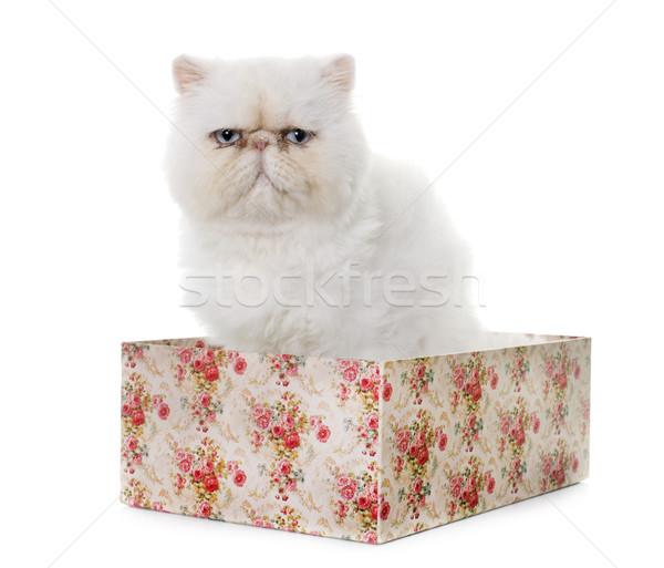 白 ペルシャ猫 目 ボックス 青 動物 ストックフォト © cynoclub