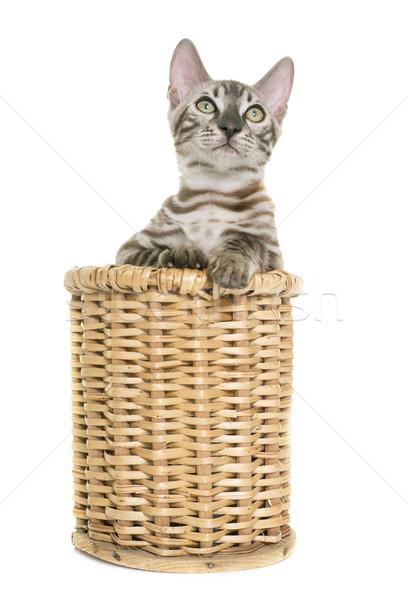 Foto stock: Jóvenes · gato · gatito · blanco · cesta