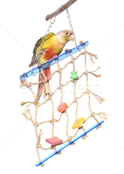 toy for parrot Stock photo © cynoclub