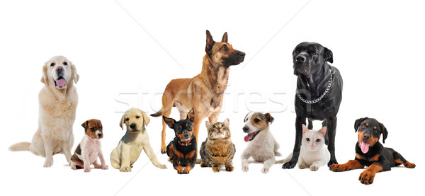 group of puppies and cats Stock photo © cynoclub
