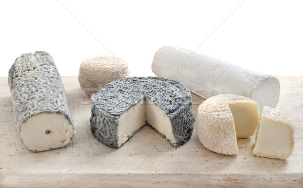 goat's cheese in studio Stock photo © cynoclub