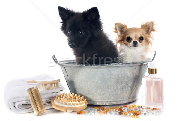 Fürdőkád kettő kutyák fürdőkád fehér fürdőszoba Stock fotó © cynoclub
