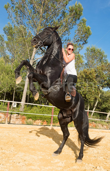riding girl on stallion Stock photo © cynoclub