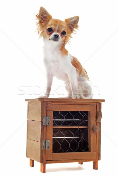 子犬 肖像 かわいい 小さな 白 ストックフォト © cynoclub