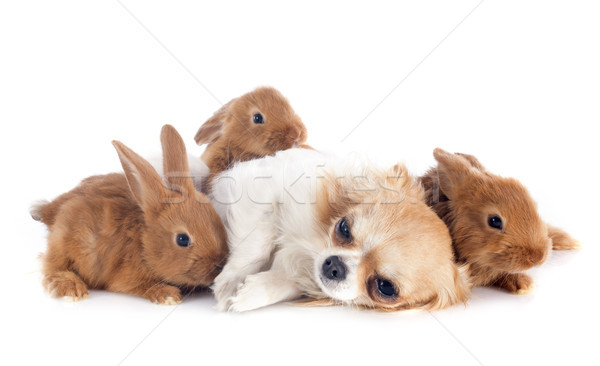 Jeunes lapins chien groupe lapin animaux Photo stock © cynoclub
