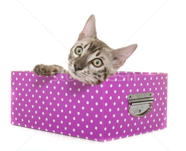 Foto stock: Jóvenes · gato · gatito · blanco · cuadro