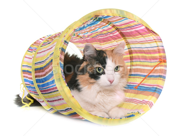 tricolor cat and tunnel Stock photo © cynoclub
