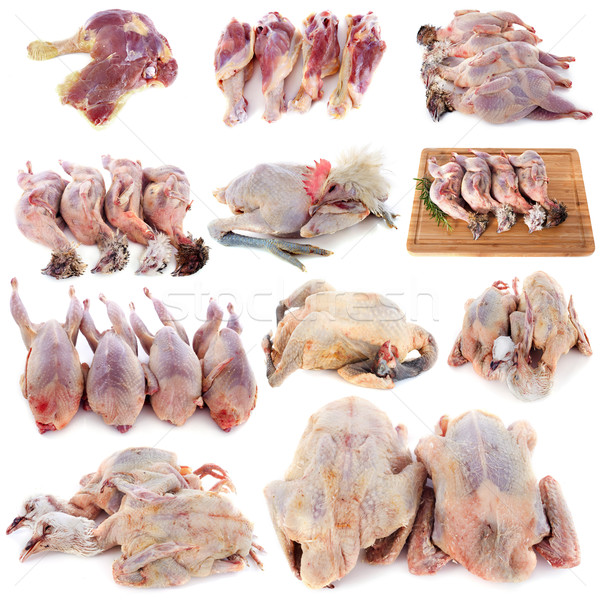 group of poultry Stock photo © cynoclub