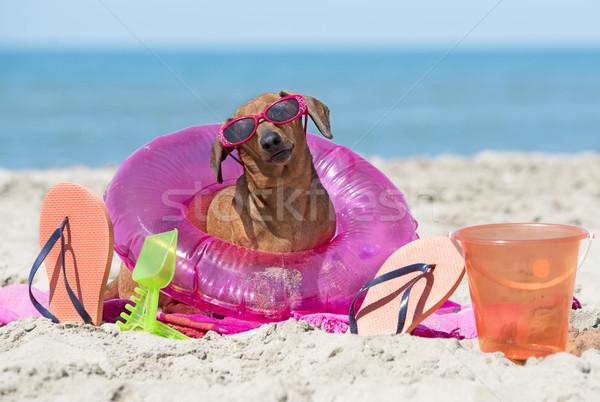 Tacskó tengerpart barna játékok homok játék Stock fotó © cynoclub