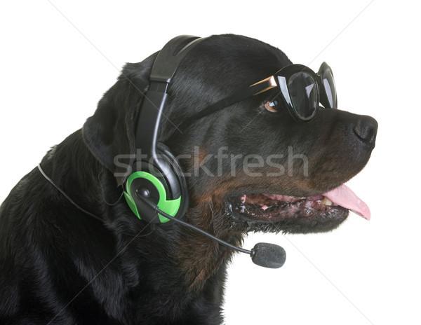 Rottweiler fejhallgató fehér zene kutya jókedv Stock fotó © cynoclub