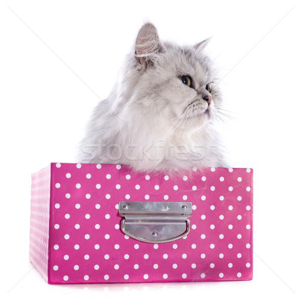 persian cat in box Stock photo © cynoclub