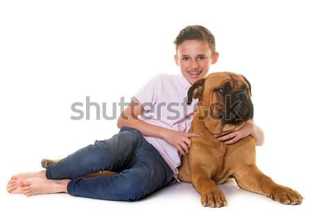 子犬 牛 マスチフ 子 白 犬 ストックフォト © cynoclub