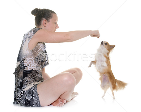 chihuahua and woman Stock photo © cynoclub