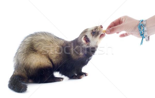 Fret mannelijke hand witte vlees Stockfoto © cynoclub