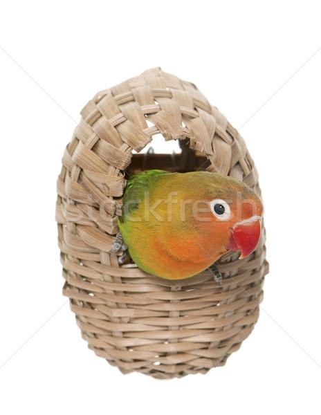 鳥の巣 卵 鳥 ボックス オウム 穴 ストックフォト © cynoclub