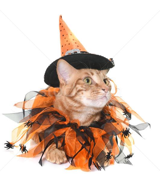 Сток-фото: имбирь · кошки · Хэллоуин · белый · Spider · мужчины
