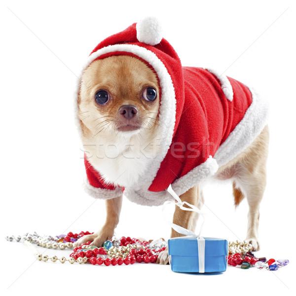 サンタクロース 肖像 宝石 クリスマス 白 犬 ストックフォト © cynoclub