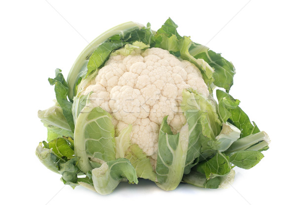cauliflower Stock photo © cynoclub