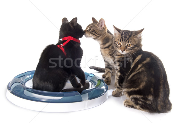 Spelen kitten witte kat bal object Stockfoto © cynoclub