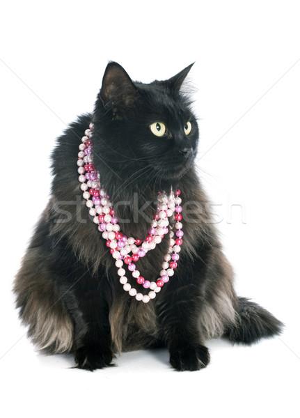 Gato preto preto estúdio rosa pérola animal de estimação Foto stock © cynoclub