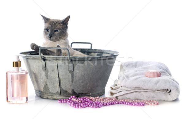 Sziámi macska tavacska fehér víz macska tiszta Stock fotó © cynoclub