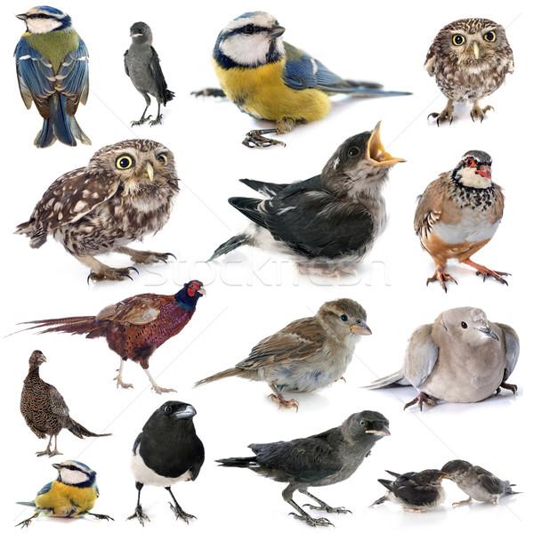 group of wild bird Stock photo © cynoclub
