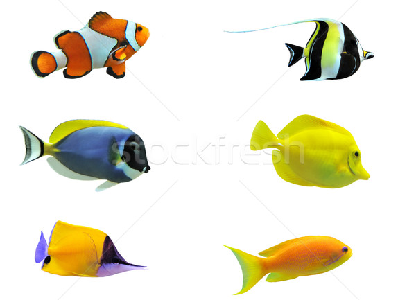 Stock photo: tropical fish