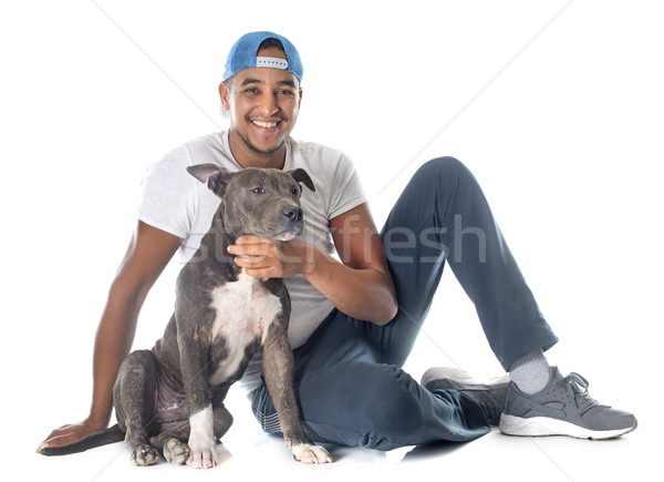 man and puppy american staffordshire terrier Stock photo © cynoclub