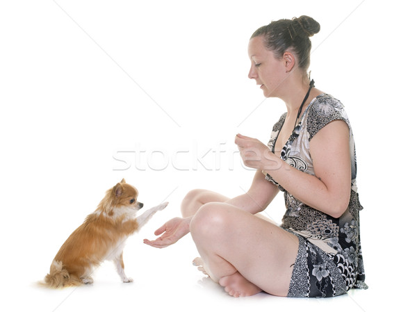Stock photo: chihuahua and woman