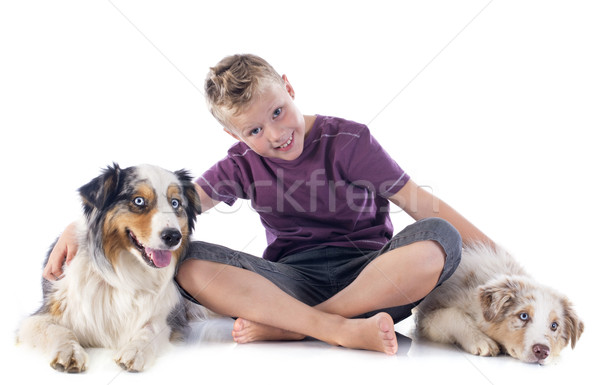 australian shepherds and boy Stock photo © cynoclub