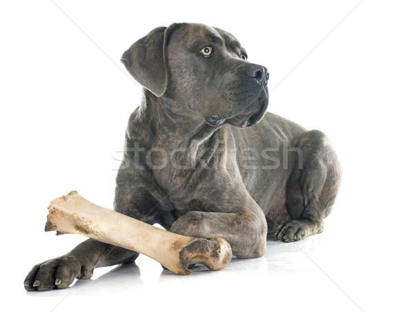 итальянский дог кость белый собака игрушку Сток-фото © cynoclub