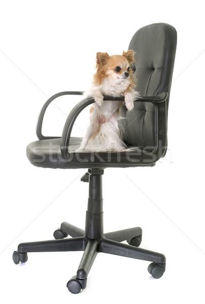 事務椅子 犬 家具 黒 仕事 革 ストックフォト © cynoclub