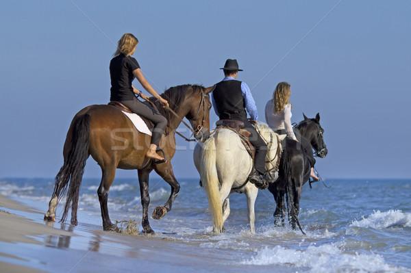 horse riders in the sea Stock photo © cynoclub