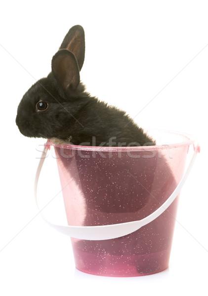 Stok fotoğraf: Tavşan · stüdyo · genç · beyaz · bebek · çiftlik