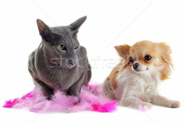 кошки портрет собака друзей Перу Сток-фото © cynoclub