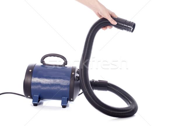 hair dryer for dog Stock photo © cynoclub