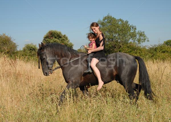 Madre hija caballo pequeño negro semental Foto stock © cynoclub