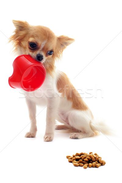 ストックフォト: 子犬 · 食品 · ボウル · 肖像 · かわいい