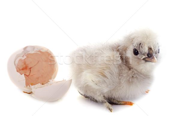 hatching Stock photo © cynoclub