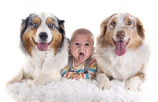 baby and dogs Stock photo © cynoclub