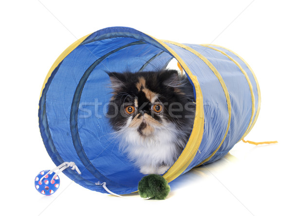 tricolor persian cat in tunnel Stock photo © cynoclub