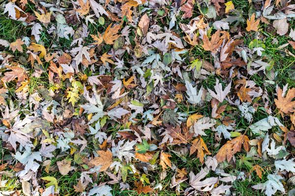 Automne laisse texture fond cuisine vert Photo stock © cypher0x
