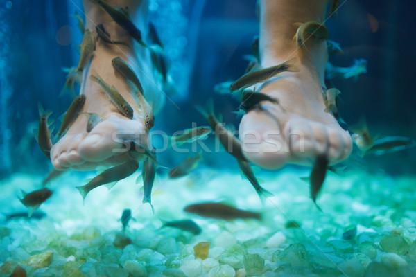魚 スパ ペディキュア 健康 スキンケア 治療 ストックフォト © d13