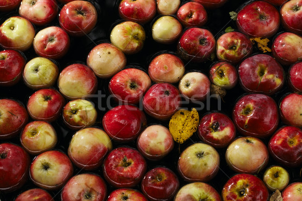 Apples in water Stock photo © d13