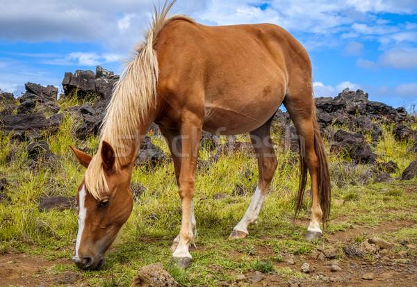 Cavalo Ilha de Páscoa campo oceano Chile céu Foto stock © daboost