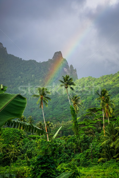 Rainbow on Moorea island jungle and mountains landscape Stock photo © daboost